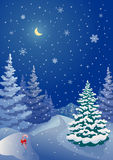 Christmas coniferous forest Royalty Free Stock Images