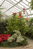 Christmas in the Conservatory Stock Image