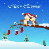 Christmas couple owls on the tree branch with socks in winter Royalty Free Stock Photography