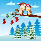 Christmas couple owls on the tree branch with socks in winter Royalty Free Stock Image