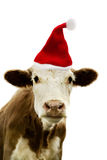 Christmas Cow. Portrait of a cow wearing a christmas hat Royalty Free Stock Images