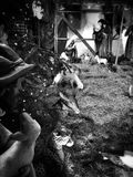 Christmas creche. Artistic look in black and white. Stock Photography