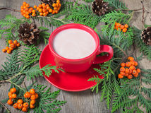 Christmas cup of cocoa, fir tree, pinecones and rowan Stock Image