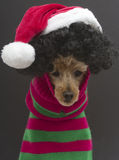 Christmas Curls Royalty Free Stock Image