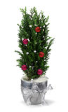 Christmas cypress decoration Stock Image