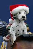 Christmas dalmatian puppy wearing santa's hat. Picture of a female Dalmatian puppy in Santa's sleigh wearing Santa's pointy cap royalty free stock image