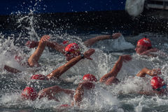 CHRISTMAS DAY HARBOUR SWIM 2015, BARCELONA, Port Vell - 25th December: swimmers race on 200 meters distance Stock Image