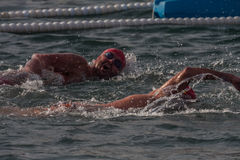 CHRISTMAS DAY HARBOUR SWIM 2015, BARCELONA, Port Vell - 25th December: swimmers race on 200 meters distance Stock Photos