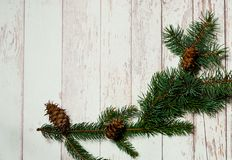 Christmas decor. Festive light background with fir branches and cones, top view, the concept of the New Year holidays, copy space royalty free stock images