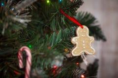 Christmas decor: gingerbread cookie. Christmas decor: gingerbread on christmas tree Stock Images