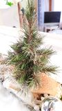 Christmas decor. Miniature fir Royalty Free Stock Photography