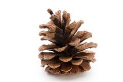 Christmas decor,  pine cone on white background. Stock Photo