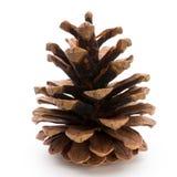 Christmas decor,  pine cone on white background. Royalty Free Stock Photo