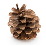 Christmas decor,  pine cone on white background. Royalty Free Stock Images