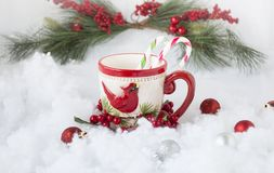 A christmas decorated coffee cup with red bird holding two candy canes. Stock Image