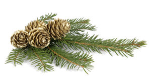 Christmas decoration. Twig of the spruce decorated with cones Stock Image