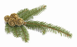 Christmas decoration. Twig of the spruce decorated with cones Royalty Free Stock Photo