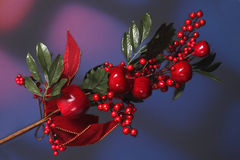 Christmas decoration. Beautiful decoration full of apples and cranberries with plenty of copy space.  Decoration is set against a festive holiday background Stock Photo