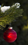 Christmas Decoration. Red Christmas bauble hanging from snow-covered branch Stock Image