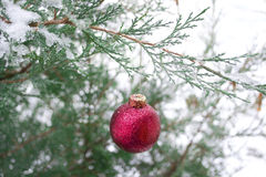 Christmas Decoration. A red christmas ball ornament hanging from an outdoor snowy pine tree branch Stock Image