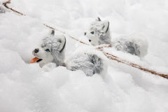 Christmas decoration Alaskan Malamute in the snow. Stock Photo