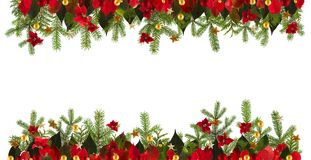 Christmas decoration background with golden stars and poinsetta Stock Image