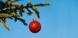 Christmas decoration on branch. Christmas decoration on green branch Stock Photo