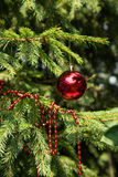 Christmas decoration on branch Royalty Free Stock Image