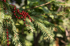 Christmas decoration on branch Royalty Free Stock Photography