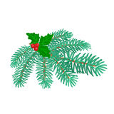 Christmas decoration branch of spruce and holly vector Stock Photography