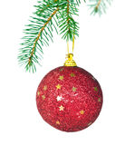 Christmas decoration bulb. Christmas bulb hanging from a tree, on white background Royalty Free Stock Photos