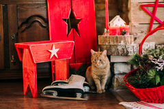 Christmas decoration. With a cat Stock Photos