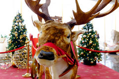 Christmas decoration, deer Royalty Free Stock Photography