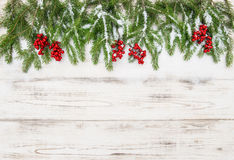Christmas decoration. Evergreen tree branch with red berries Stock Images