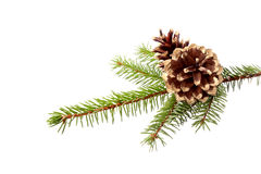 Christmas decoration - fir branch with gilded cones Stock Photography