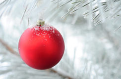 Christmas decoration on fir tree branch. Red Christmas bauble hanging on fir tree branch covered in snow Royalty Free Stock Photos