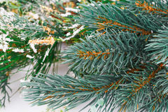 Christmas decoration. With fir-tree branch Royalty Free Stock Photo