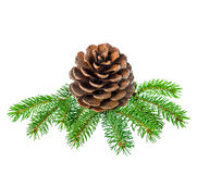 Christmas decoration of fir tree branch with cedar cone is isola Stock Photography