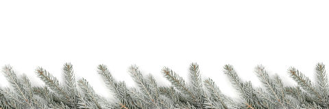 Christmas decoration fir tree branches snow winter isolated on w Stock Photography