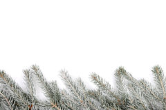 Christmas decoration fir tree snow winter isolated on white Stock Images