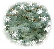 Christmas decoration with  flakes Stock Images