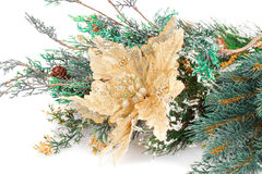 Christmas decoration. With flower and fir-tree branch Stock Photo