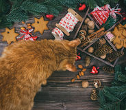 Christmas decoration with ginger cat hanging over the wooden background Stock Photos