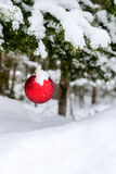 Christmas Decoration Hanging off a Tree Royalty Free Stock Photo