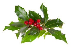 Christmas decoration with holly Stock Images