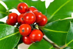 Christmas decoration with holly leaves and berries Stock Images