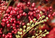 Christmas decoration ilex verticillata or winterberry holly stock images
