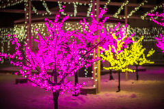 Christmas decoration lights on trees Stock Images