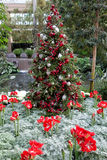 Christmas decoration in Longwood Gardens. Christmas tree decorated with red and white glass beads and surrounded by red flowers Stock Images