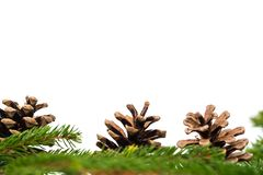 Christmas decoration, pine cones isolated on white stock photo